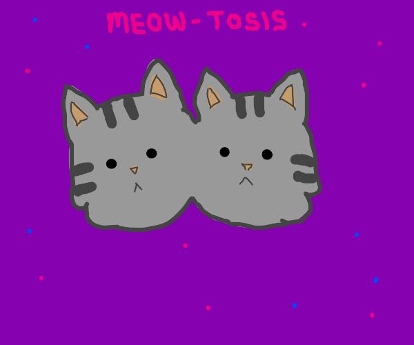 Cat Mitosis