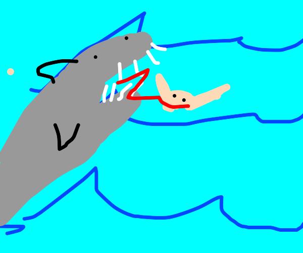 non-peaceful shark