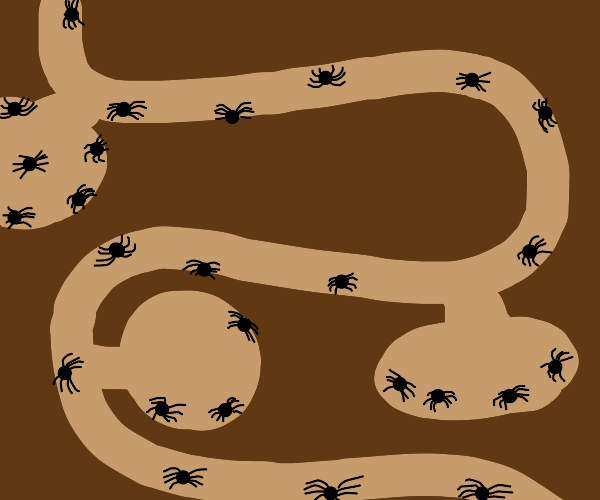 ant farm but spiders