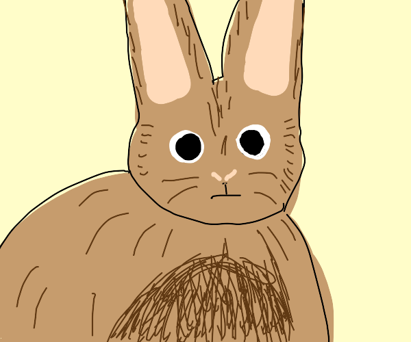 Big fat rabbit looks at you
