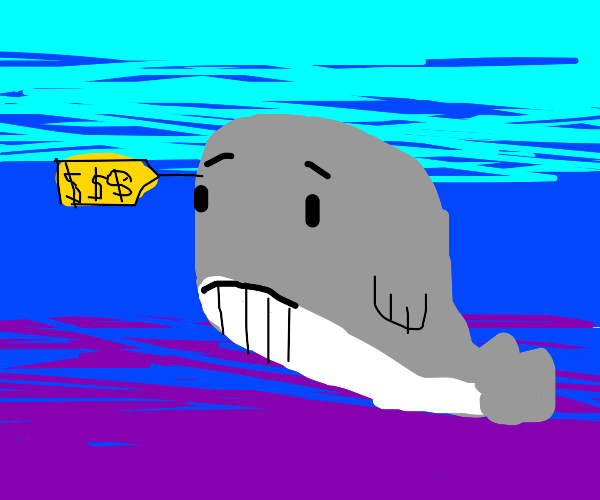 Whale 4 sale illegally