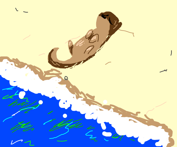 Otter laying on beach