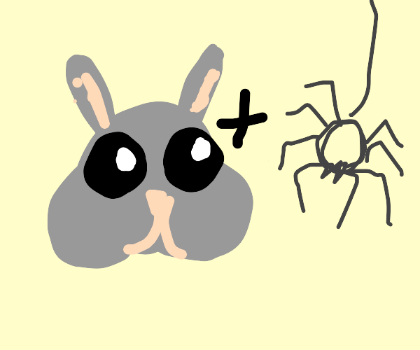 rabbit spider hybrid