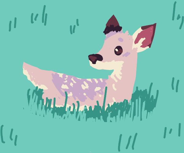 little deer in tall grass