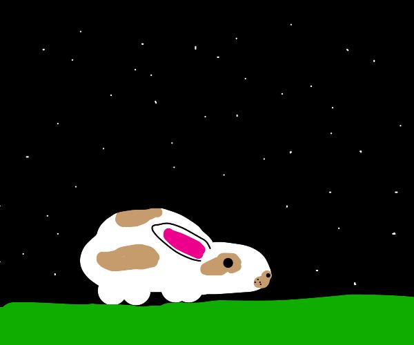 Bunny in the dark