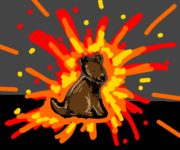 Dog in an explosion