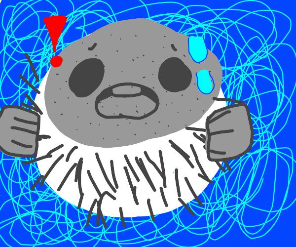 Surprised puffer fish