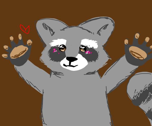 Cute raccoon face