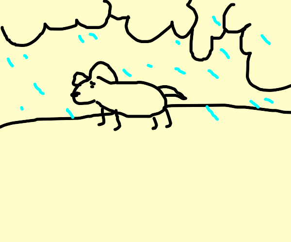 dog walking in a thunderstorm