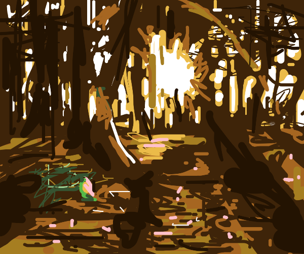 Forest in the sunset