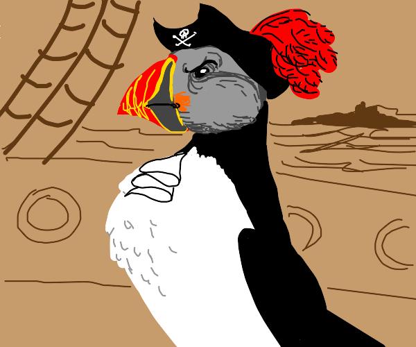 Pirate puffin.