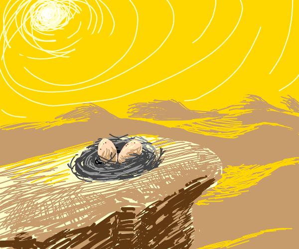 Nest in the Desert