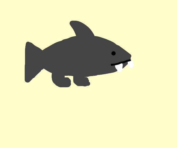 Shark with feet