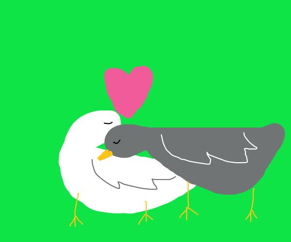 A couple of lovey-dovey love birds.