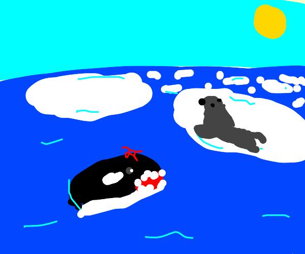 Jealous Orca