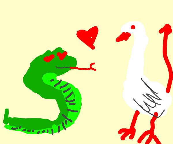 Snake likes devil goose