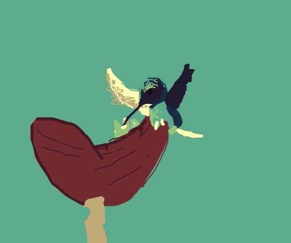 Hummingbird drinks flower nectar