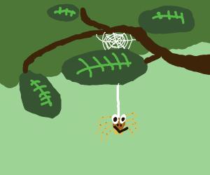 momo the spider