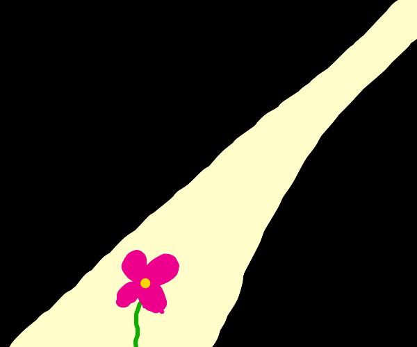 Light strikes flower