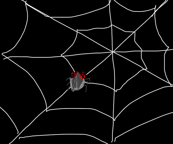 Flies in a spiderweb