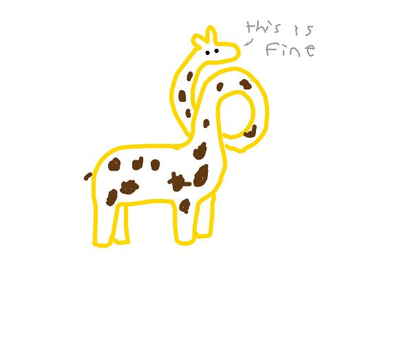 Contorted giraffe