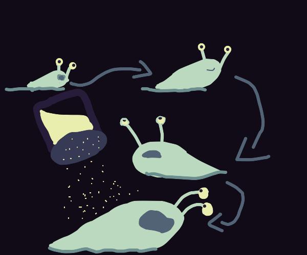 the life of slug
