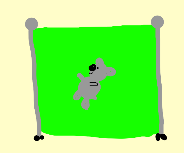 A koala on a green screen