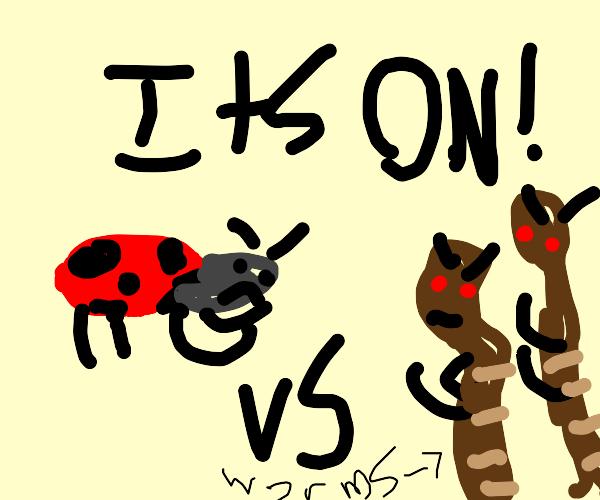 Ladybird fighting evil black worms