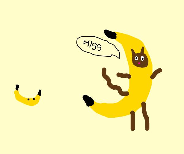 Cat in banana costume hisses at banana