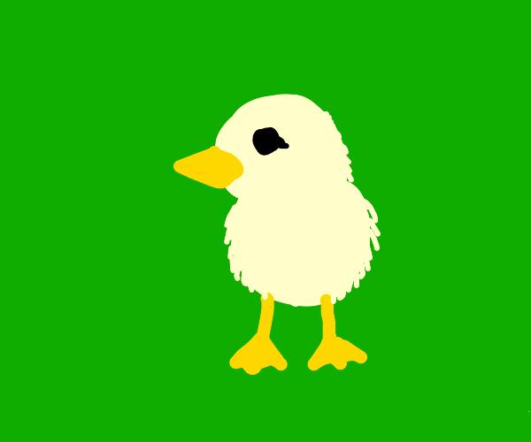 A fine chick