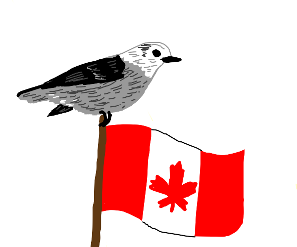 The bird of Canada