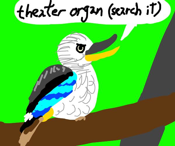 Laughingkookaburra(user)