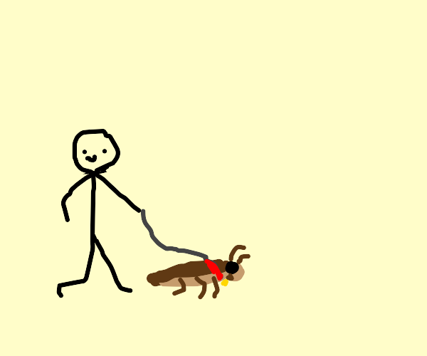 going on a walk with a pet roach