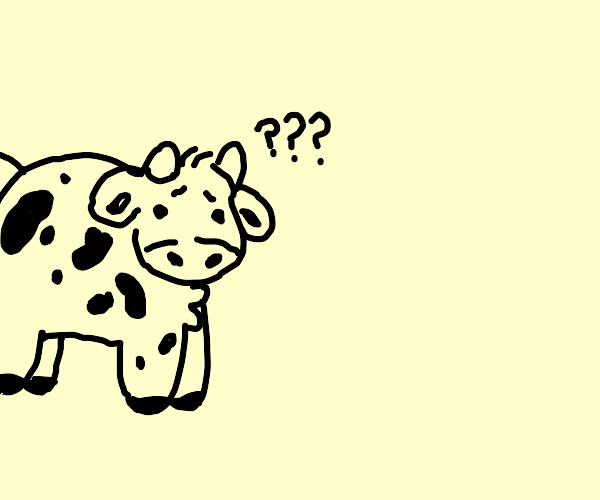 Confused cow