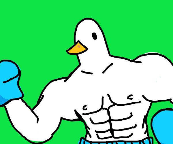 Buff White Duck in Blue Boxing Attire