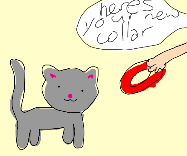 Cat getting collar put on (Red)