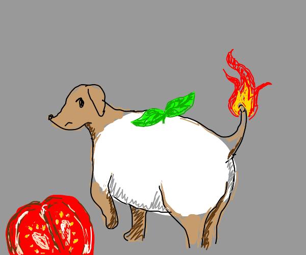 Mozzarella Dog on fire.