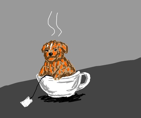 Teacup poodle in a teacup