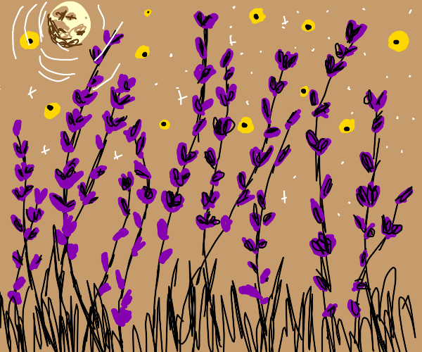 lavender in the moonlight