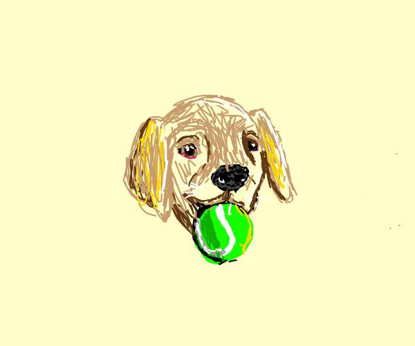 Dog retrieves ball