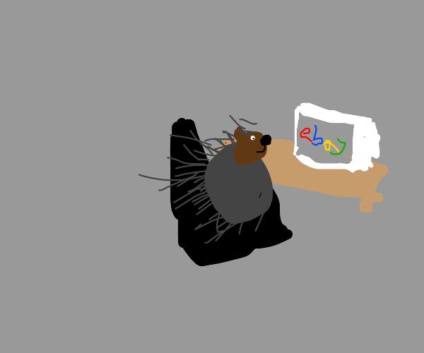 Porcupine on E-bay
