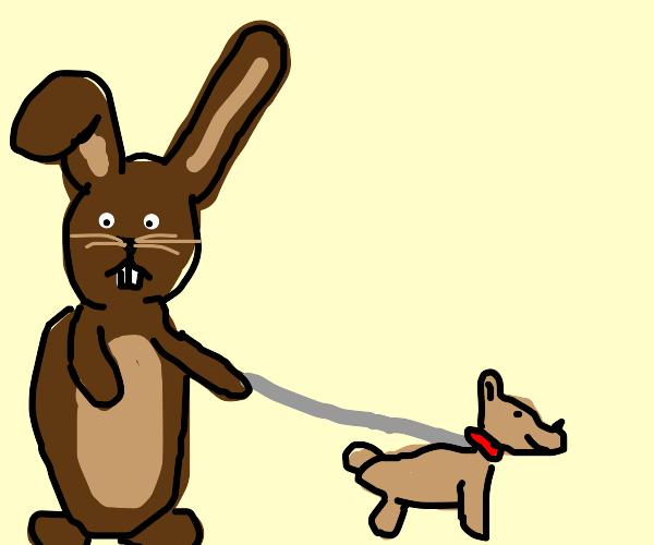 a rabbit walks their dog