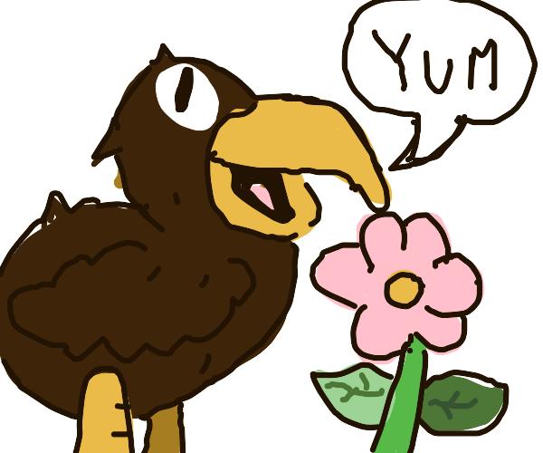 A bird eating a flower