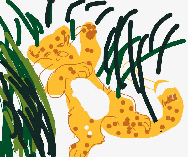 cool cheetah enjoys summer day