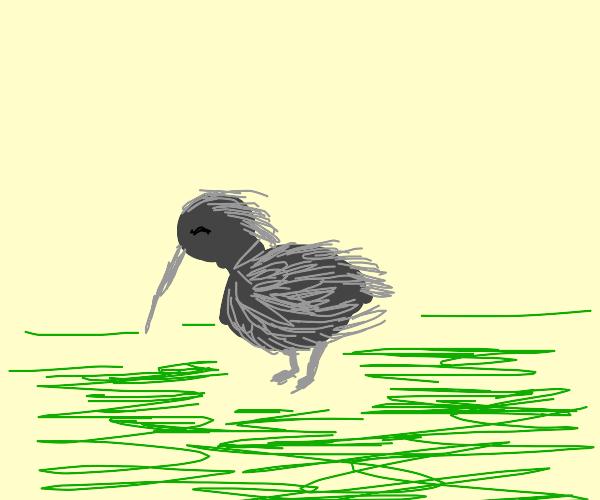 just a cute lil kiwi bird
