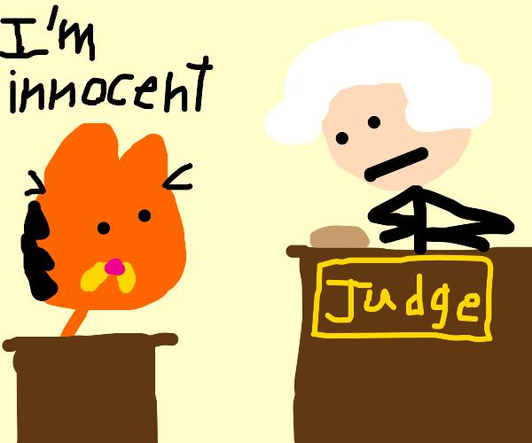 Cat is Innocent