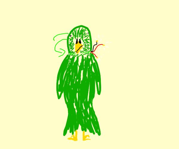 Broken Parakeet