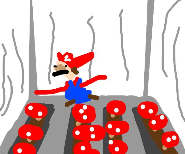 Mario Grows Shrooms