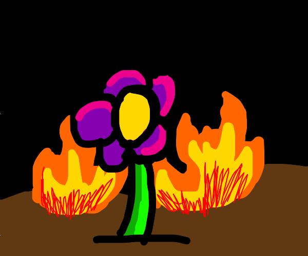 Purple flower in burning scene