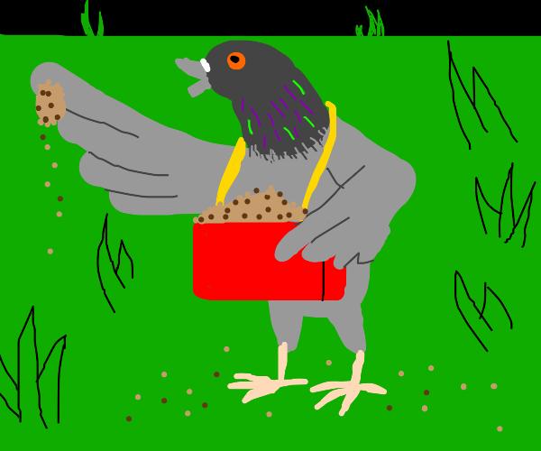 Bird sells seed